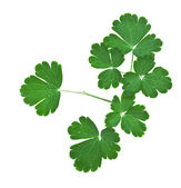 Branch of green leaves — Stockfoto