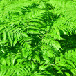 Fern growing in a forest — 图库照片
