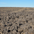 Fertile, plowed soil of an agricultural field — Stock Photo