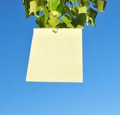 Blank paper — Stockfoto
