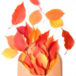 Autumnal envelope - Foto Stock