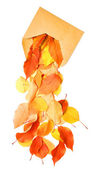 Autumnal envelope — Stock Photo