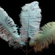 White feathers on black — Stock Photo
