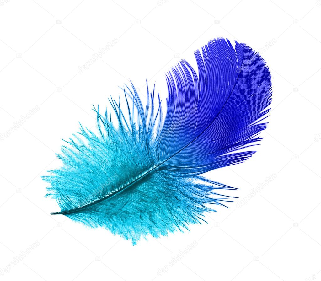 Feather of the blue bird steaming midair — Stock Photo #3737068