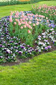 Many tulips and pansies on the field outdoor — Stock Photo