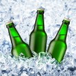 Beer is in ice — Stock Photo