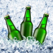 Beer is in ice — Stock Photo #3409499