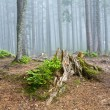 Foto Stock: Forest landscape