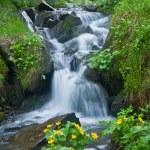 Waterfall — Stock Photo #3409623