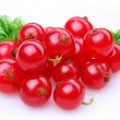Currant red — Stock Photo #3412426