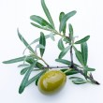 Green olives — Stock Photo