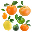 Citruses - Stock Photo