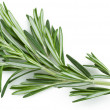 Rosemary — Stock Photo #3416580
