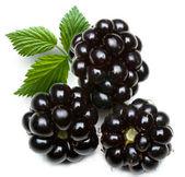Dewberry — Stock Photo