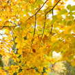 Autumn foliage — Stock Photo #3434591