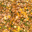 Autumn foliage — Stock Photo #3434724