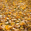 Autumn foliage — Stock Photo #3434756