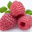 Raspberry — Stock Photo #3434871