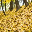 Autumn foliage — Stock Photo #3434889