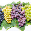 Grape — Stock Photo #3440635