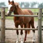 Horse — Stock Photo #3440812