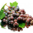 Grapes — Stock Photo #3447804