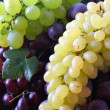 Grapes — Stock Photo #3447816
