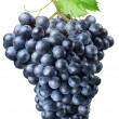Cluster of grapes — Stock Photo #3598825