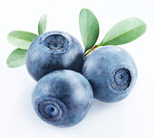 Bilberry — Stock Photo