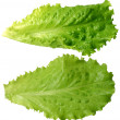 Frond salad — Stock Photo