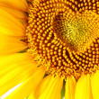 Stamens in the form of heart on a sunflower - Stok fotoğraf