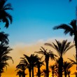Royalty-Free Stock Photo: The silhouettes of palms on beautiful sunset background