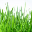 Green grass — Stock Photo #3607299