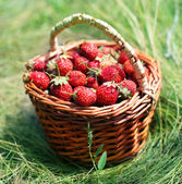 Strawberry in a basket on a grass. — Stock Photo