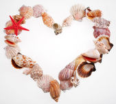 Shells in a shape of valentine's heart on a white — Stock Photo