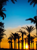 The silhouettes of palms on beautiful sunset background — Stock Photo