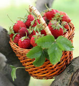 Strawberry in a basket — Stock Photo