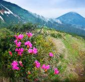 Blossom shrub — Stock Photo