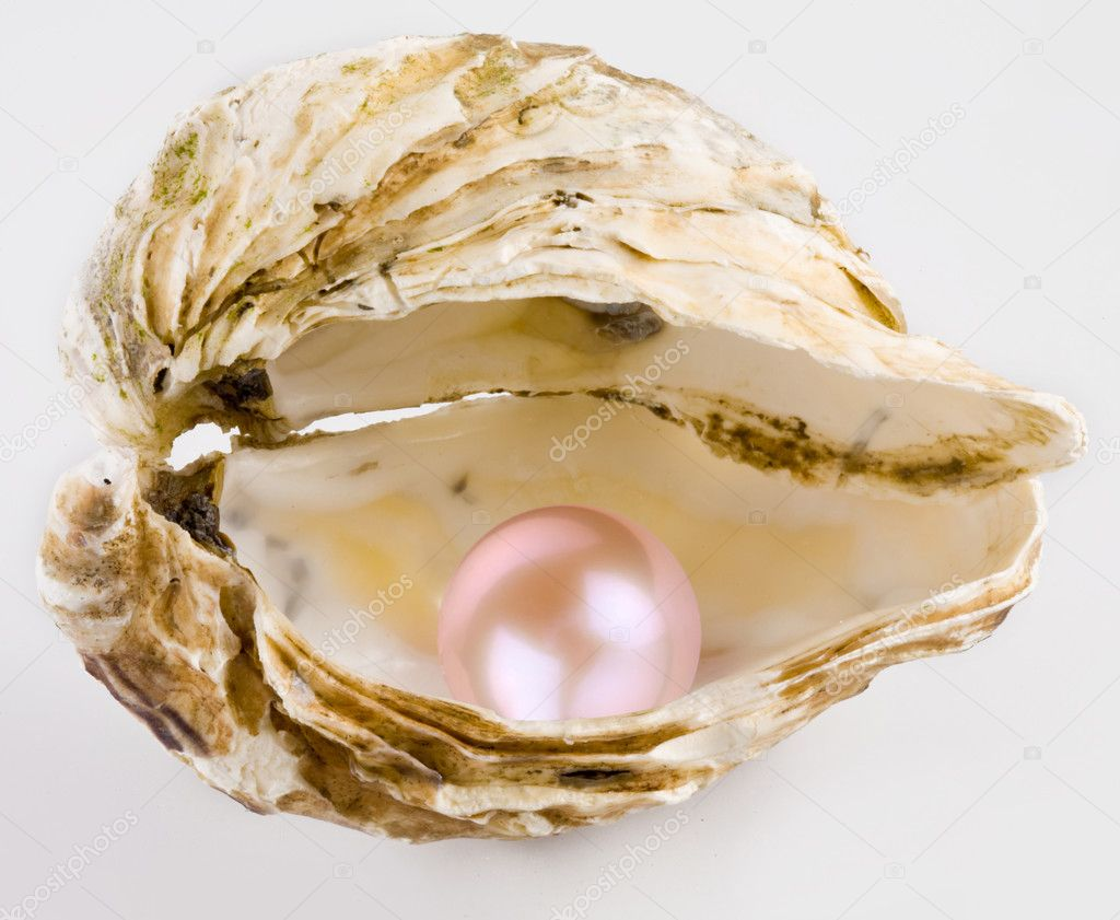 Pink pearl is in a shell. — Stock Photo #3605964