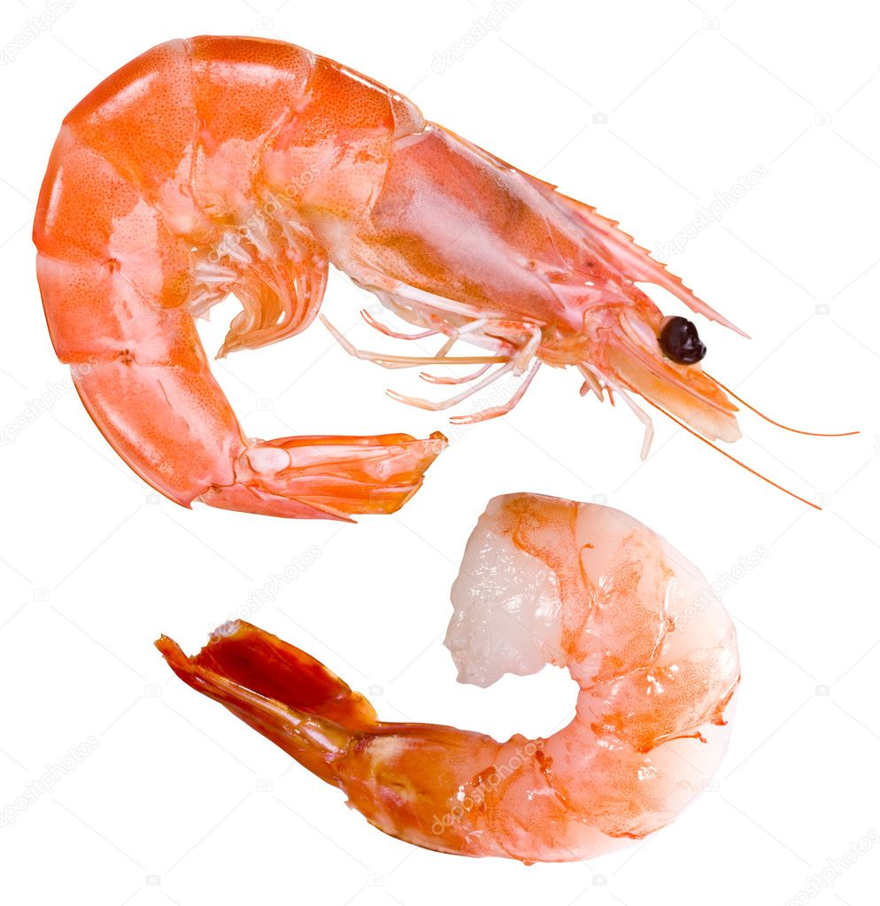 Shrimp — Stock Photo #3606071