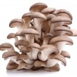 Oyster mushrooms on a white background - Foto Stock