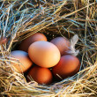 Chicken eggs in straw in morning light. — Stockfoto #3649391