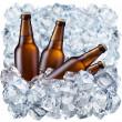 Bottles of beer on ice — Stock Photo