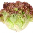 Bunch lettuce leaves. - Stock Photo