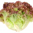 Bunch lettuce leaves. — Stock Photo