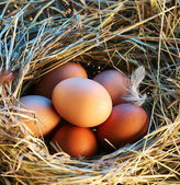 Chicken eggs in the straw in the morning light. — Stockfoto
