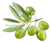 Branch with green olives. — Stock Photo