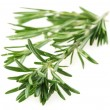 The branch of rosemary . - Stock Photo