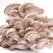 Oyster mushrooms on a white background — Stock Photo #3653292
