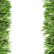 The leaves of rosemary on the edge of the photos as a framework. — Stock Photo